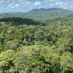 Cairns' Rain Forest